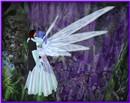 Blue Butterfly Love