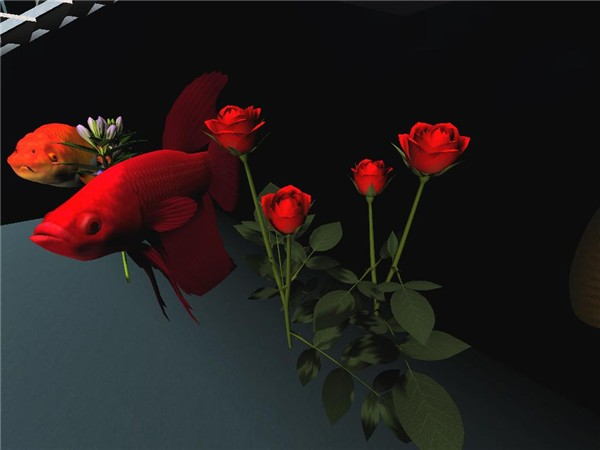 Roses and Fish