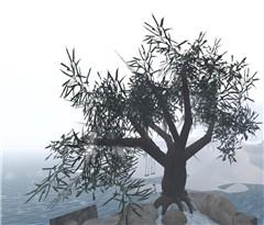 Olive002