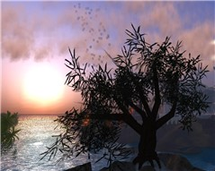 olive001