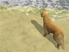 Lone Dog
