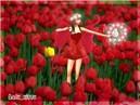 Tulips'_Fairy