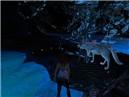 Templum Ex Obscurum Wolf