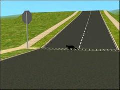 OMG. The black cat crosses the road!