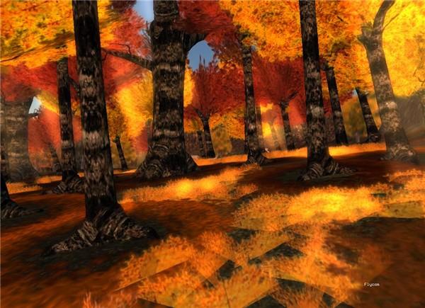 amazing forest - Natty Foggarty