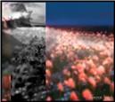 Tempura Flower Experiments