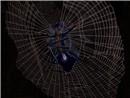 Oh, my.... spider.