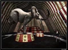 343 circus