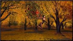 autumndreamF