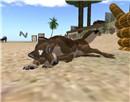 Puppy! - Draygone Llewellyn