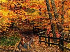 autumn - the fall