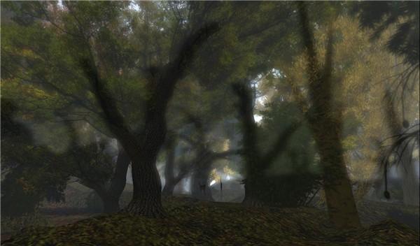 forest at dawn - watcher Castaignede