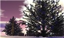 Winter Calls - Poid Mahovlich