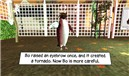 Snougle: Rockhopper Penguin