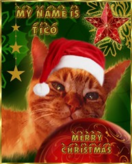 """My Cat """"Tico"""""""
