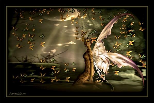 Dream of the butterflies
