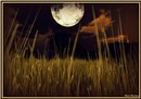 Moon over Owls Bay