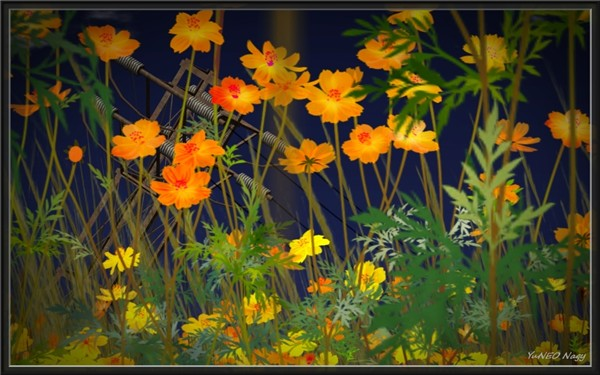 feast_03 Orange Poppy