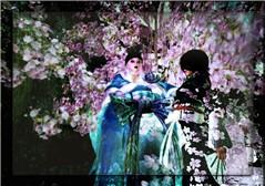 Cherry Blossom Goddess