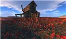 Red flowers in SL - Koinup Burt