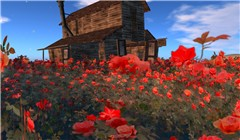 Spring arrived in SL - Koinup Burt