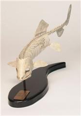 fishskeleton