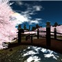 Cherryblossoms,Pure_Angel01