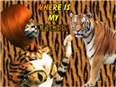 Tiger`s life