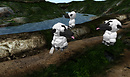 Sheep, Vodka and Bridge Dances The sheep discover our drystack walls (05.14.09)