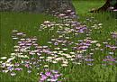 Purple Wildflowers and Daisies