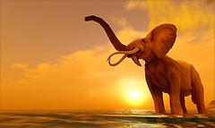 Sunset and elephant