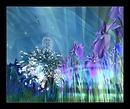 Côté fleur bleue