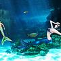 Underwater  love?