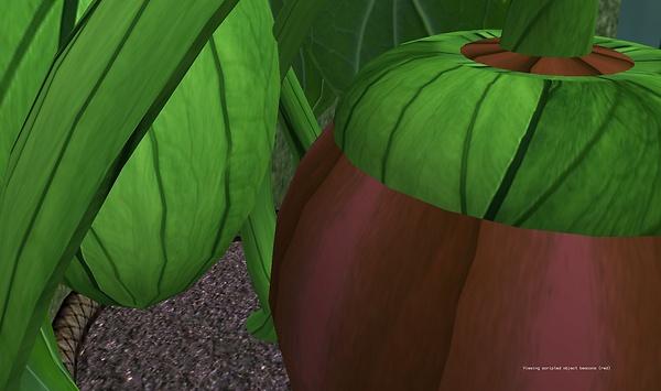A plant - Lorimae Undercroft