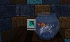 Amos the Goldfish