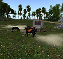 Horses in Mexico