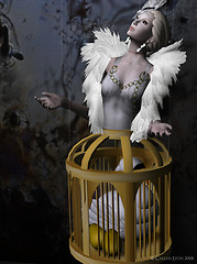 The Language of Dolls - The Caged Swan
