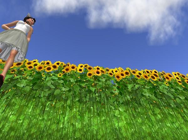 sunflower - teto Sosa