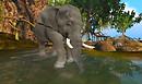 Brackish_Elephant