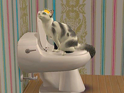 My  cat is king ! He pie on the toilet!!