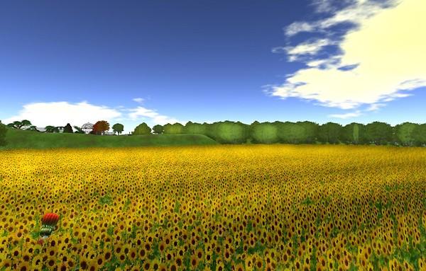 400,000 sunflowers last day - Ravenelle Zugzwang