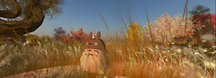 Totoro wandering 3