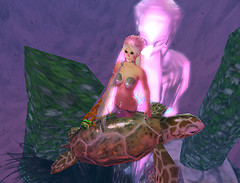 Ko plays with Sea Turtle near Energy Statute
