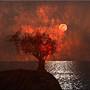 Burning Under the Moonlight