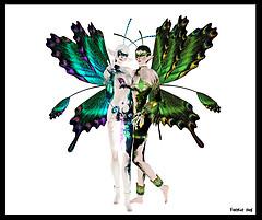 Regal Wings