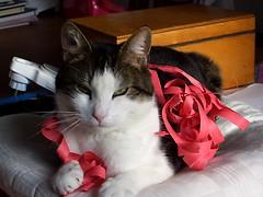My cat! ^.^