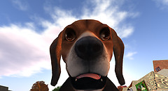 my_friend_dee_dee_transmogrified_into_a_beagle