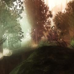 Dernwine's Forest