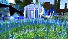 feast - virtual nature - Koinup Burt