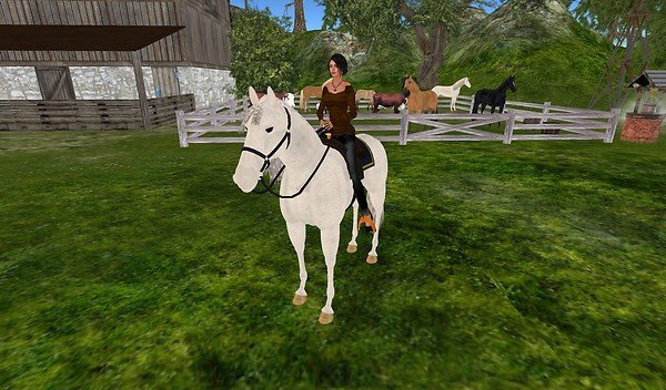 riding horse at farm